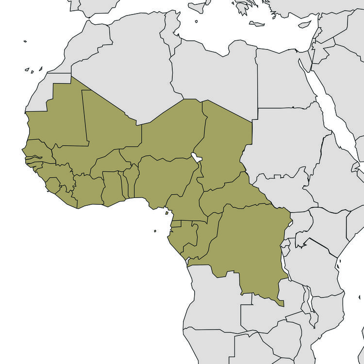 Iodine Global Network (IGN) - West & Central Africa